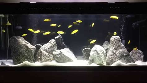 New Lake Malawi Mbuna Fish Tank | How to aquascape Mbuna