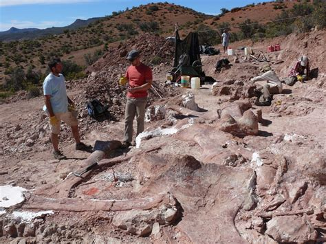 Dinosaur fossil is 'biggest creature to ever walk Earth