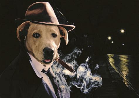 A Collection of Interesting Dog Photoshops