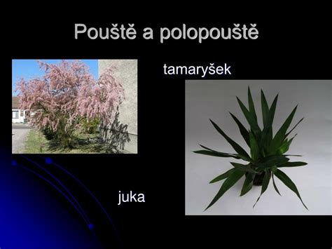 PPT - Co je to biom? PowerPoint Presentation, free