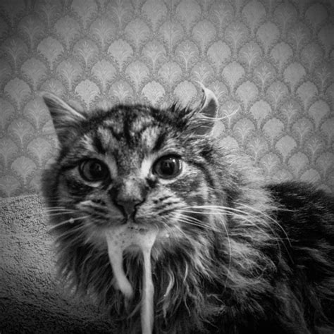 Feral Feline Photography : cat photography series