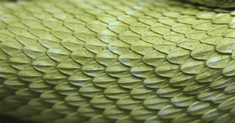 Reptiles0012 - Free Background Texture - snake reptile